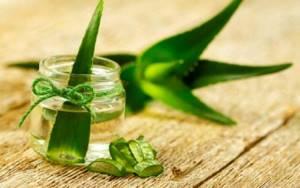 Лечение геморроя алоэ: эффективные способы применения растения