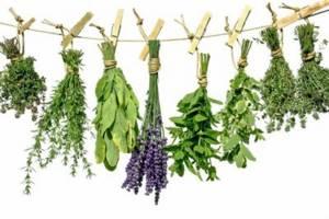 Эффективные и недорогие травы от геморроя