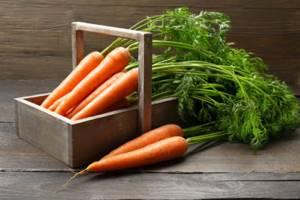 Как применяется ботва моркови от геморроя?