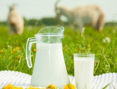 Польза молока и отрицательные стороны употребления